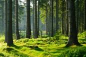 Filière forêt-bois : France Bois Forêt confie à Nomadéis une mission d'évaluation croisée des retours d'expérience de plusieurs programmes d'action…