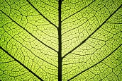 (Français) Séquestration carbone : Eau de Paris confie une mission d'étude stratégique à Nomadéis…