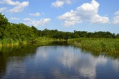 Southern Swamps