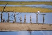 Ecosystèmes et changement climatique : Nomadéis va évaluer les services écologiques rendus par quatre zones humides en Méditerranée…