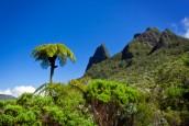 Outre-mer : le Département de La Réunion confie à Nomadéis et Cyathea une étude évaluative et prospective de la filière forêt-bois…