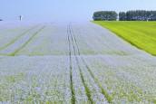 Bétons végétaux : Nomadéis accompagne la filière lin-fibre pour la valorisation de co-produits agricoles en Europe…